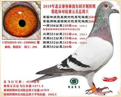 19北京赛客林波尔同铁鹰1.25万羽对抗四总鸽王258名