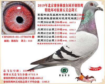 19北京赛客林波尔同铁鹰1.25万羽对抗四总鸽王230名