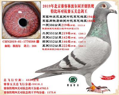 19北京赛客林波尔同铁鹰1.25万羽对抗四总鸽王194名
