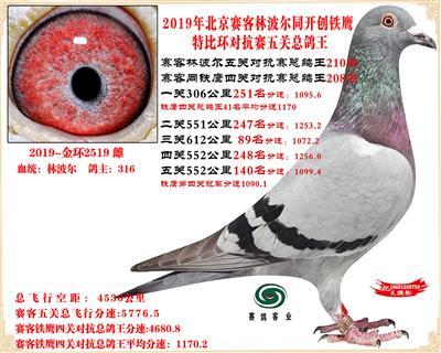 19北京赛客林波尔同铁鹰1.25万羽对抗四总鸽王210名