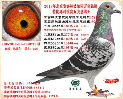 19北京赛客林波尔同铁鹰1.25万羽对抗四总鸽王178名