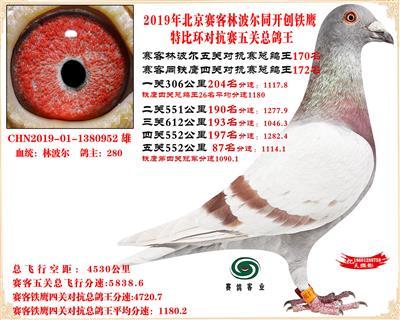 19北京赛客林波尔同铁鹰1.25万羽对抗四总鸽王170名