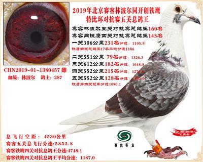 19北京赛客林波尔同铁鹰1.25万羽对抗四总鸽王160名