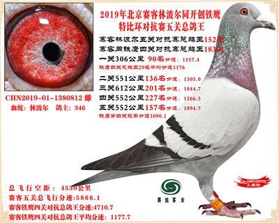 19北京赛客林波尔同铁鹰1.25万羽对抗四总鸽王152名