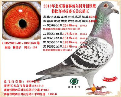 19北京赛客林波尔同铁鹰1.25万羽对抗四总鸽王162名