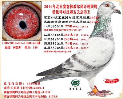 19北京赛客林波尔同铁鹰1.25万羽对抗四总鸽王140名
