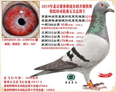 19北京赛客林波尔同铁鹰1.25万羽对抗四总鸽王121名