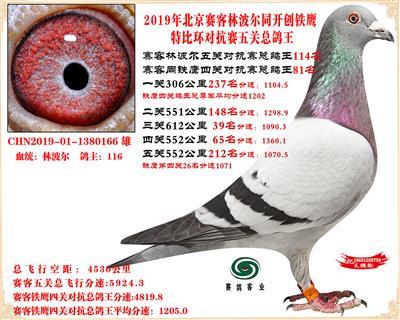 19北京赛客林波尔同铁鹰1.25万羽对抗四总鸽王114名