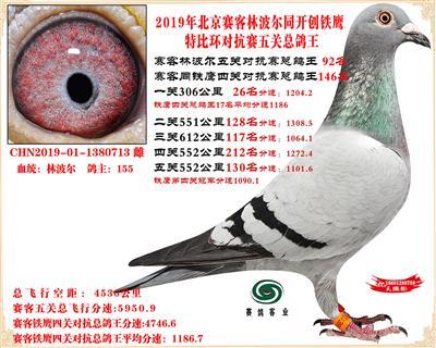 19北京赛客林波尔同铁鹰1.25万羽对抗四总鸽王92名