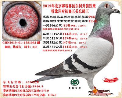 19北京赛客林波尔同铁鹰1.25万羽对抗四总鸽王99名