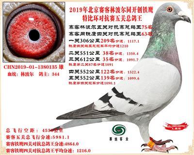 19北京赛客林波尔同铁鹰1.25万羽对抗四总鸽王75名