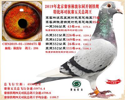 19北京赛客林波尔同铁鹰1.25万羽对抗四总鸽王77名
