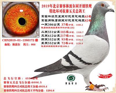 19北京赛客林波尔同铁鹰1.25万羽对抗四总鸽王63名
