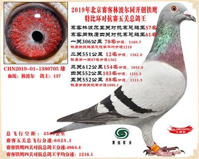 19北京赛客林波尔同铁鹰1.25万羽对抗四总鸽王57名