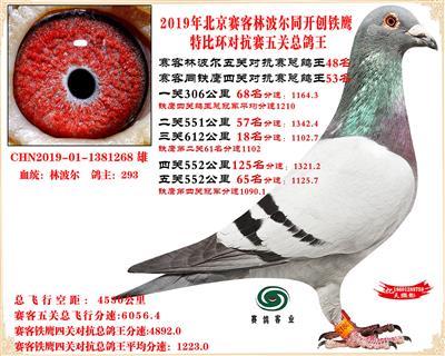 19北京赛客林波尔同铁鹰1.25万羽对抗四总鸽王48名