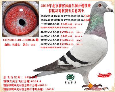 19北京赛客林波尔同铁鹰1.25万羽对抗四总鸽王56名