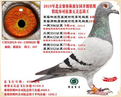 19北京赛客林波尔同铁鹰1.25万羽对抗四总鸽王8名
