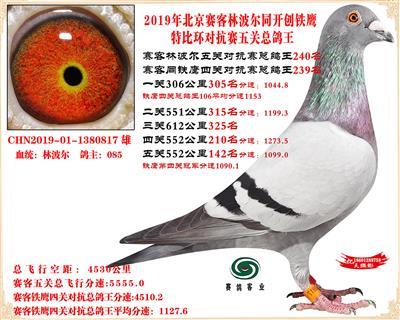 19北京�客林波��同�F��1.25�f羽��抗�五�P���王240名
