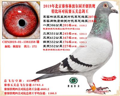 19北京�客林波��同�F��1.25�f羽��抗�五�P���王207名