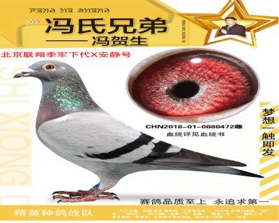 北京�翔季��O代472