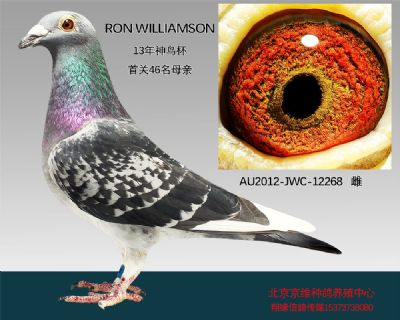 """RON  WILLIAMSON""-12268"