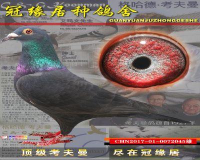 考夫曼配台湾黑045