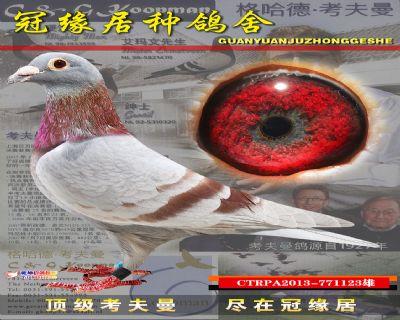 台湾红轮黑目小雄个体好123
