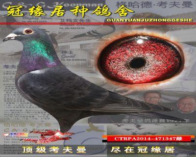 台湾347