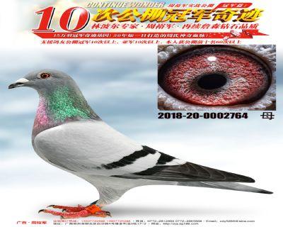 柳州四关鸽王季军全平辈