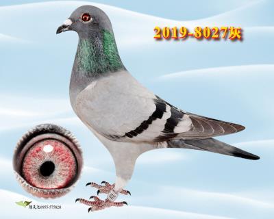 8027 雌  �w翼�直女