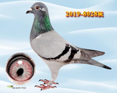 8028 雌   �w翼�直女