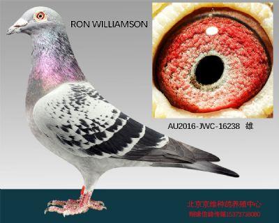 """""""RON  WILLIAMSON""""-16238"""