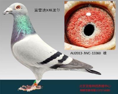 """""""富雷迪×林波��""""-13360"""