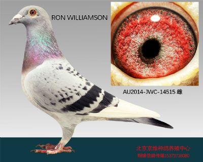 """""""RON  WILLIAMSON""""-14515"""