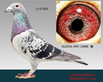 """""""公牛999""""-14506"""