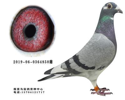 戈�R利-白羽����850