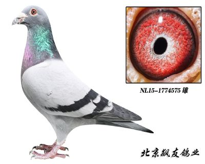 夏拉肯原舍【超�利�W】近�HNL15-1774575