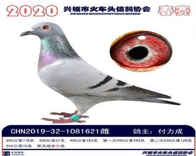 �p�P30付力成