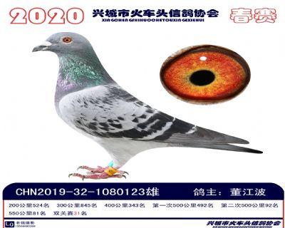 �p�P31董江波