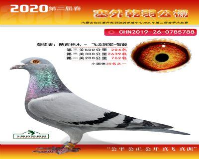 塞外乾羽�Q�204名