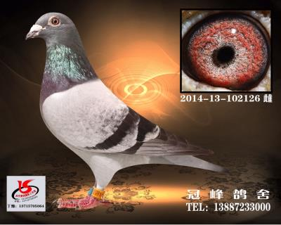 凡王.126