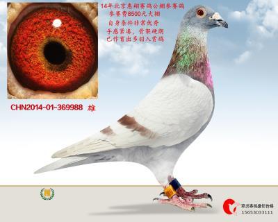 14年北京惠翔�①���