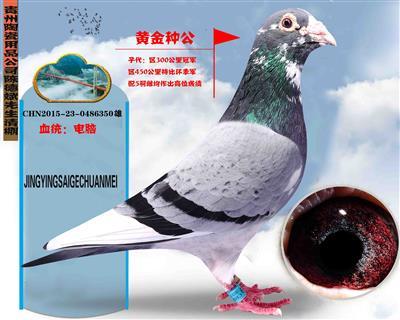 贵州陶瓷用品公司陈德斌先生(黄金种公)