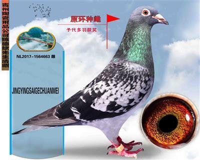 贵州陶瓷用品公司陈德斌先生(原环种雌)