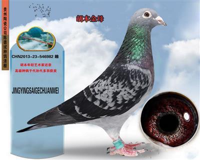 贵州陶瓷用品公司陈德斌先生(胡本金母)
