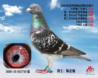 霞浦���f三�P��王11名