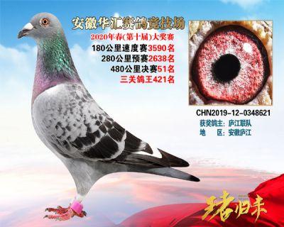 安徽�A�R�Q�51名