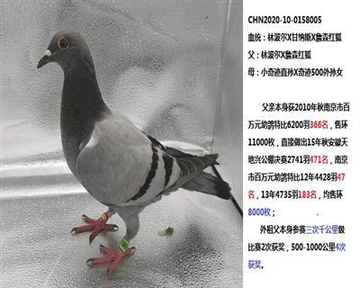 20年幼��【林波��x甘�{斯x�t狐】