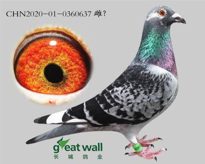 5.�_����王76子代.0360637