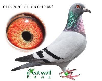 7.四�P��王61半弟.0360619